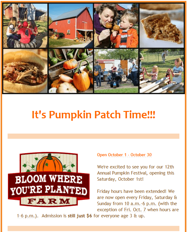 Pumpkin patch1